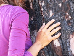 A woman placing her hand on a pine tree and embrazing the tree